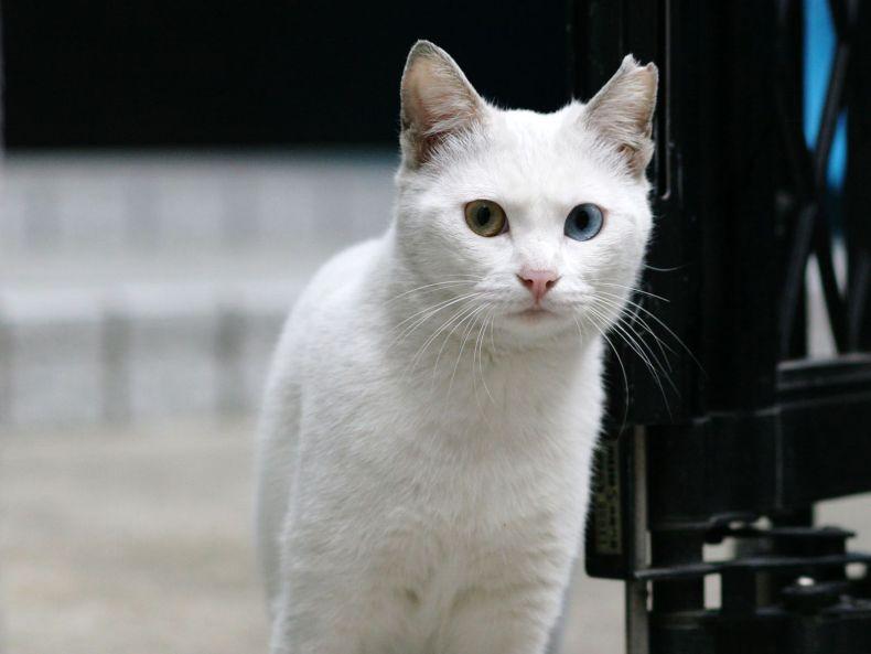 Очень преочень классные фотографии котов (56 фото) 49