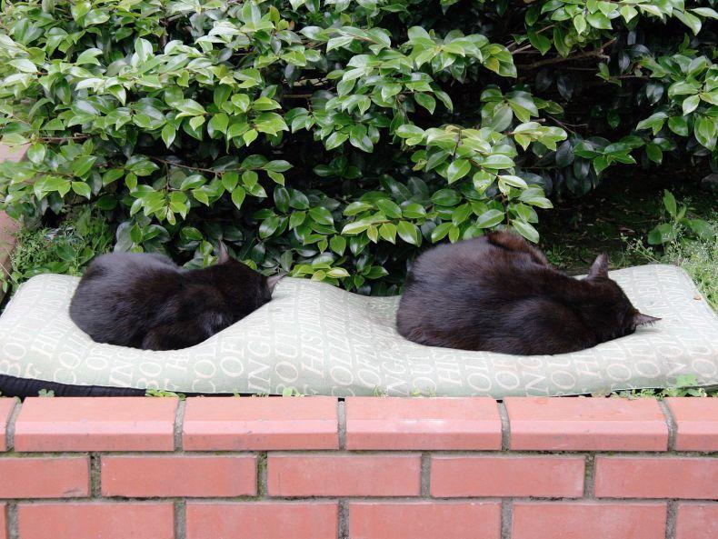 Очень преочень классные фотографии котов (56 фото) 50