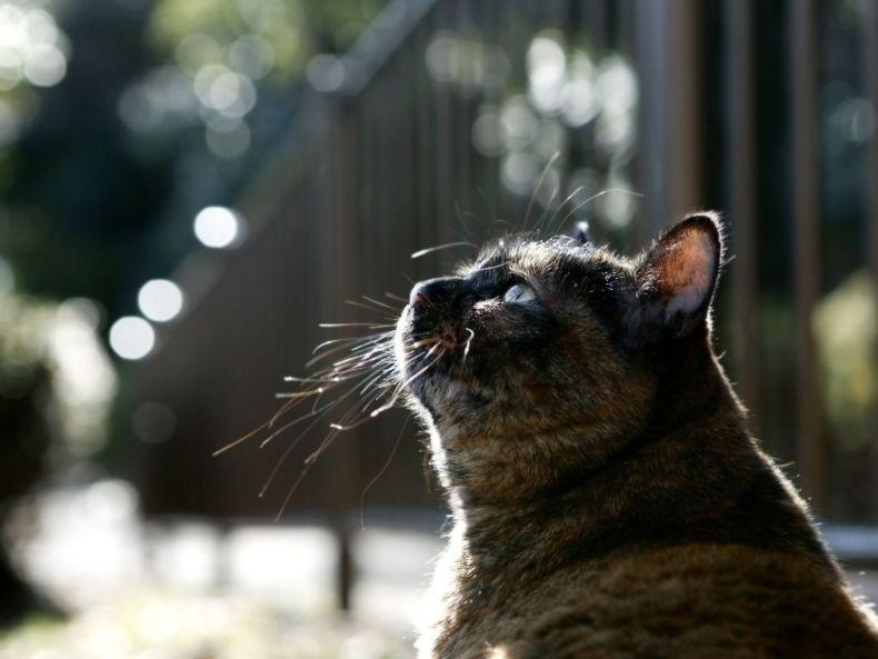 Очень преочень классные фотографии котов (56 фото) 52