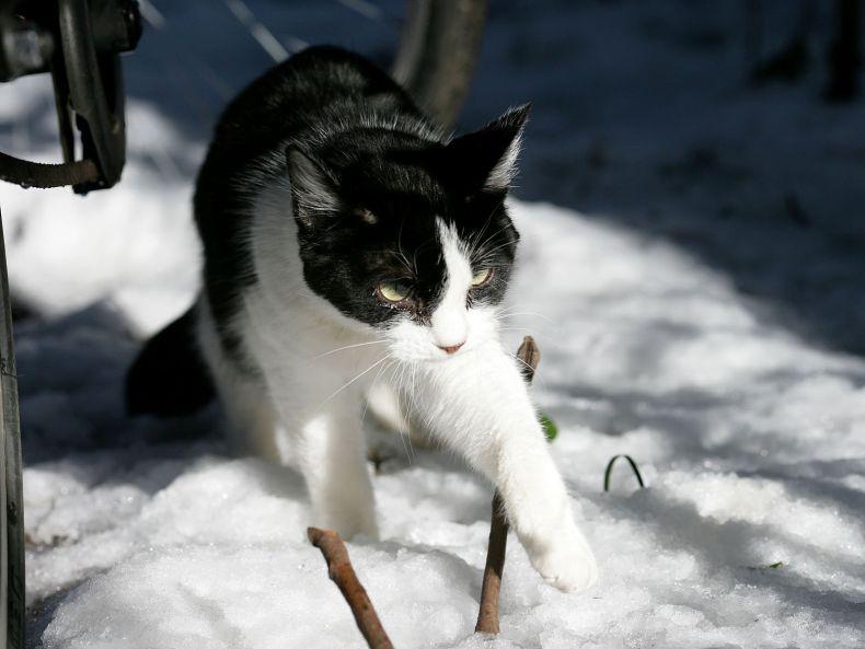 Очень преочень классные фотографии котов (56 фото) 53