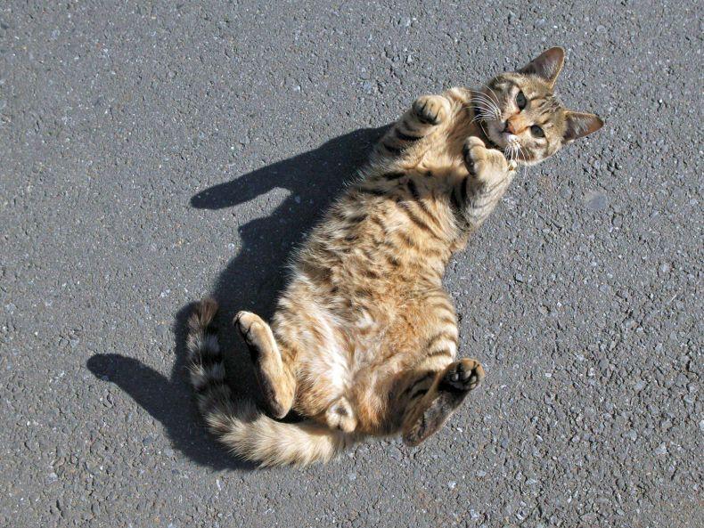 Очень преочень классные фотографии котов (56 фото) 54