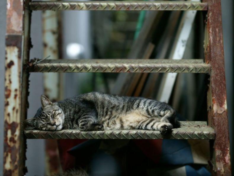 Очень преочень классные фотографии котов (56 фото) 55