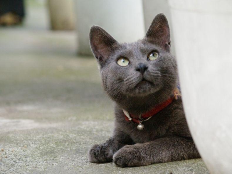 Очень преочень классные фотографии котов (56 фото) 56