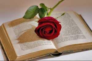 розы и книга