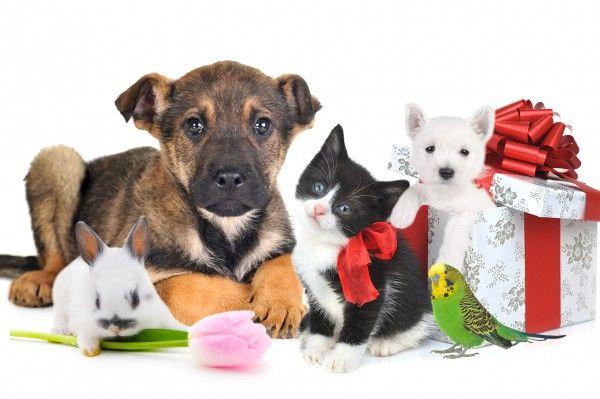 Какое домашнее животное выбрать?